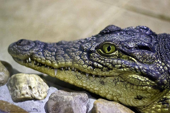 В Доме творчества отметили день рождения крокодилов
